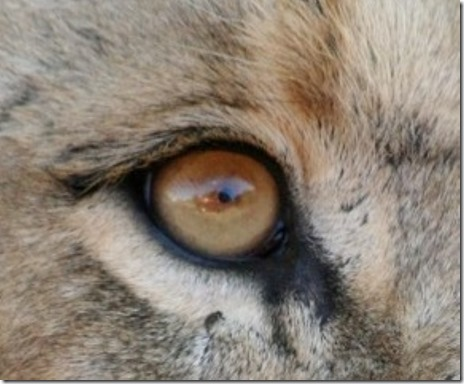 IMG_1687 eye (Medium)